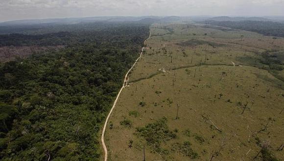 selva amazónica brasil