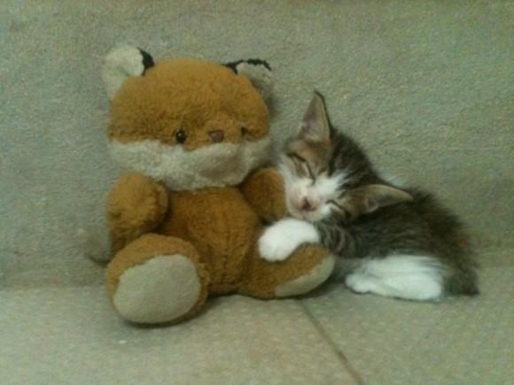 El gato Jorgito y su mascota. Foto dcora / Cubadebate