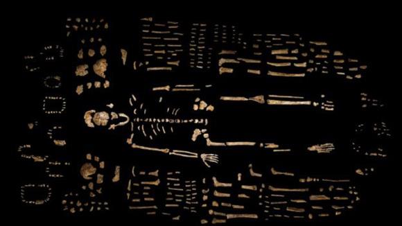 El llamado Homo Nadeli habría vivido hace tres millones de años. Foto: AP.