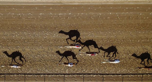 Shoyab captó esta imagen de la carrera anual de camellos Al Marmoum en Dubai.