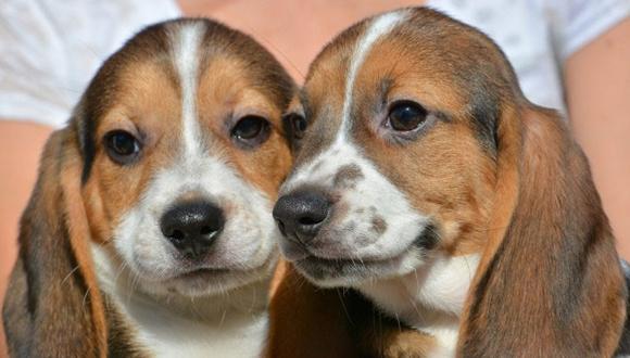 Dos de los primeros cachorros nacidos por fecundacion in vitro. Foto tomada de Radio Santa Cruz