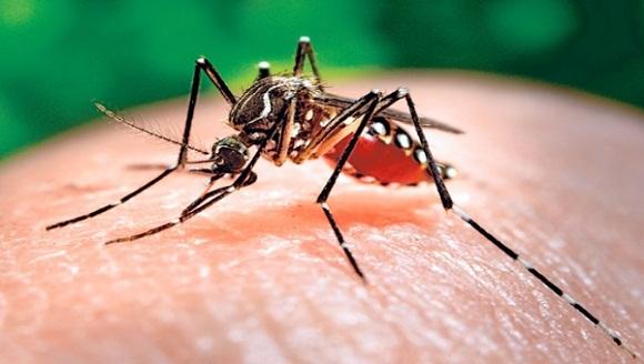 mosquito2.jpg_