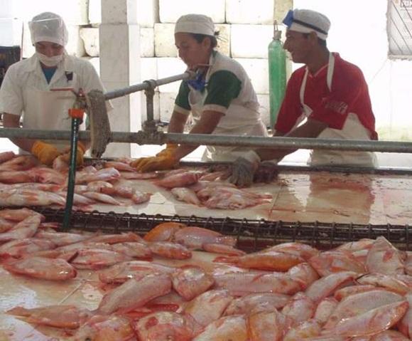 De las 13 provincias que practican la acuicultura, 10 cumplieron sus planes respectivos.