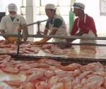 producción pesquera + cuba