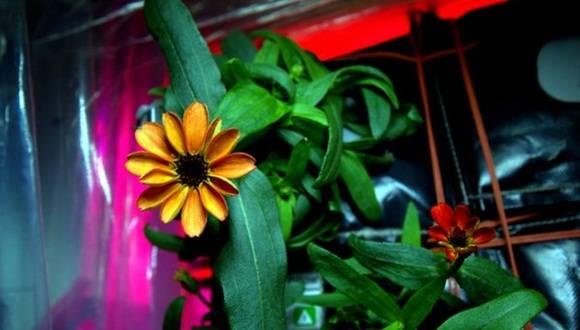 la primera flor que nace fuera de la Tierra.
