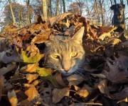 gato-que-se-hace-fotos-el-mismo (2)