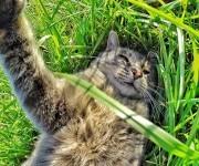 gato-que-se-hace-fotos-el-mismo (6)