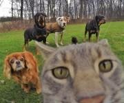 gato-que-se-hace-fotos-el-mismo (7)