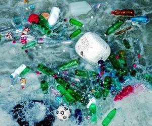 Foto: Ecologismos.com
