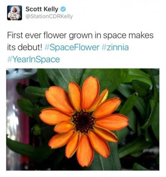 scott kely flor