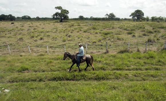 Monta tu caballo. Foto: Ismael Francisco/Cubadebate.