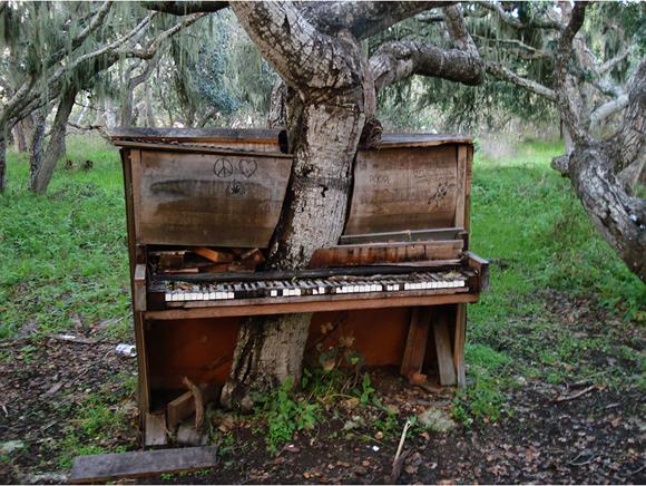 El árbol-piano en el estado de California, EE.UU. Foto: Crackoala.
