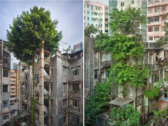 Victoria de los arboles sobre los edificios, Hong-Kong. Foto: Romain JL.