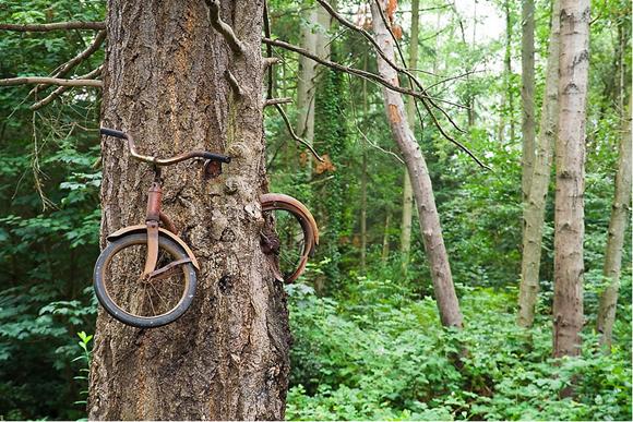 El árbol.bicicleta. Foto: @Ethan Welty.
