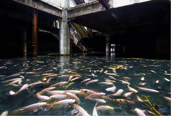Centro comercial abandonado en Bangkok, Tailandia. Foto: @JesseRockwell.