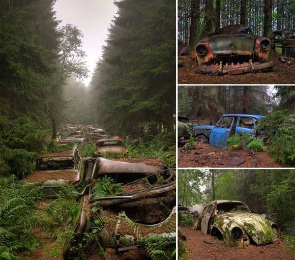 Automóviles abandonados en un bosque de Bélgica. Foto: @Rosanne de Lange.