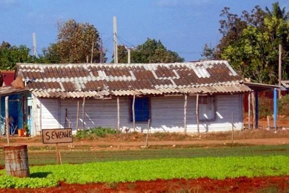 """""""Aumentar la producción """" es la respuesta cuando se busca una solución al problema de los precios en los agromercados. Foto: José Raúl Concepción/Cubadebate."""