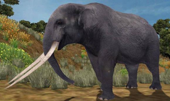 Colmillo elefante Pakistan