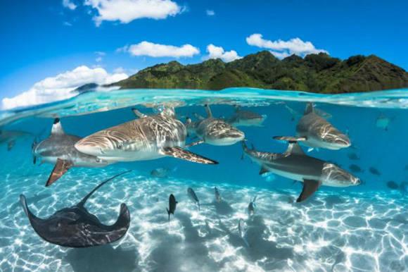 Greg Lecoeur estaba navegando en la Polinesia Francesa cuando se vio rodeado de una intensa vida marina que decidió retratar en esta imagen que combina la superficie y el movimiento submarino. Foto: Greg Lecoeur.