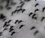 Datos de la OMS confirman que más de veinte países de América Latina se ven afectados por el virus del Zika.