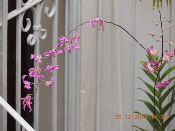 Flor de orquidea Foto: Ernesto Roque / Cubadebate