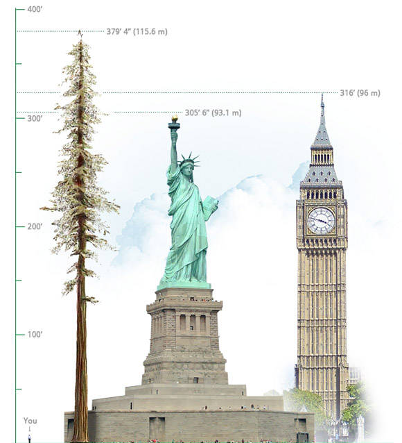 Comparación de la altura de un hombre, el árbol más grande, la Estatua de la Libertad y el Big Beng.