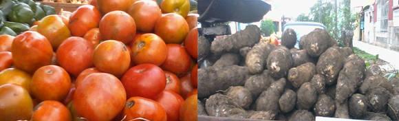 El tomate y la malanga son los productos más caros en este momento en los carretilleros cubanos. Foto: María del Carmen Ramón.