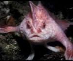 pez con nariz y pies