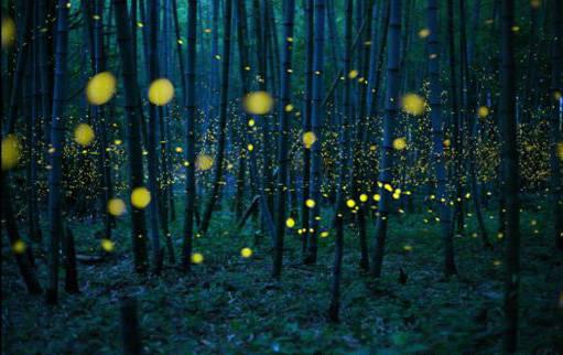 Luciérnagas en Japón, fotografiadas bajo la luz de la Luna, por Kei Nomiyana, ganó en la categoría Baja Luz de la competencia Abierta. Foto: Kei Nomiyana.