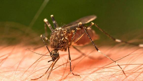 Agencia de Salud Pública del Caribe advierte sobre posible brote severo de dengue en la región