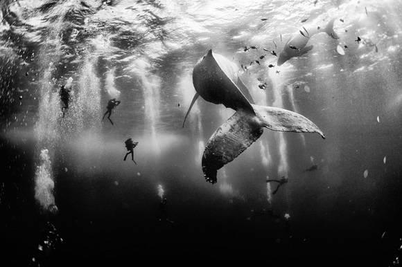 """""""Susurro de ballena"""", primer lugar del concurso. Foto: Anuar Patjane Floriuk."""