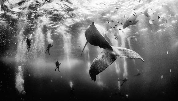 National Gegraphic premio foto  Anuar Patjane Floriuk