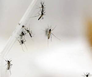 Sri Lanka reporta más de 69 mil casos de dengue en 2017