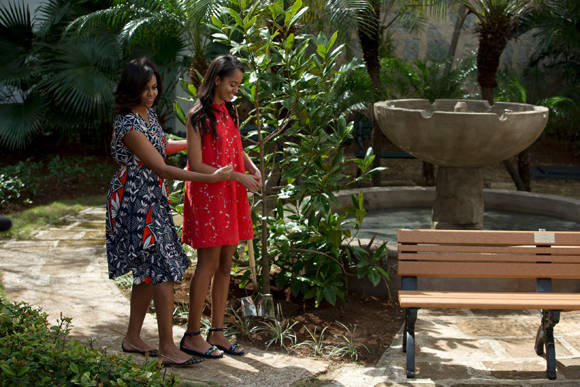 Michelle Obama dejó sembrados en La Habana, el último día de su estancia, dos pequeños árboles de Magnolia. Foto: AP.
