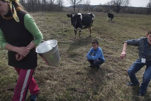 Uno de los pocos sustentos que tiene la familia de Viktoria Vetrova para alimentarse, son estas dos vacas que comen pasto contaminado. Foto: AP.