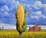 corn-USA