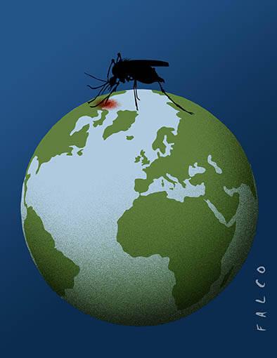 Mosquitos. Autor: Falco