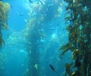La falta de oxígeno pondrá en grave peligro a la vida marina. Foto: Archivo.