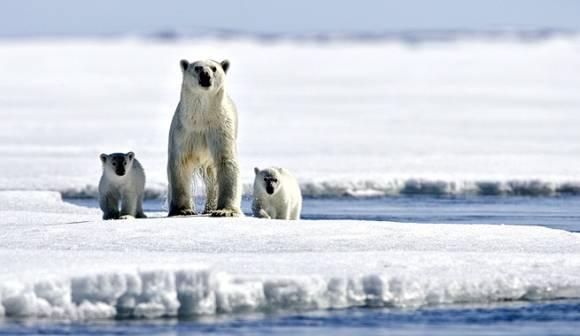 Osa polar junto a sus cachorros. Foto: Archivo.