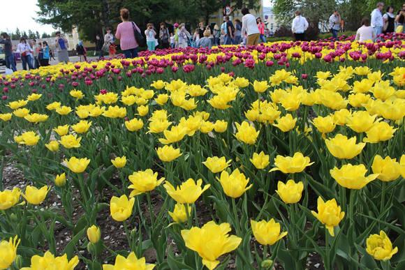 Flores en el interior del Kremlin