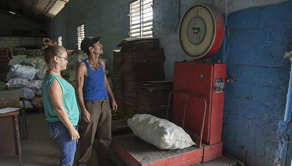 Pesaje de los desechos en la CNA de  San José de las Lajas . Foto: Ismael Francisco / Cubadebate