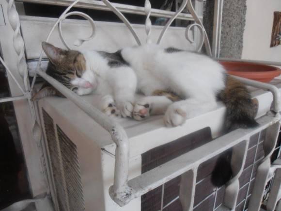 Cuando hay cansancio todas las camas son mullidas. Foto: Dr. Alexis Corrales, Villa Clara. / Cubadebate