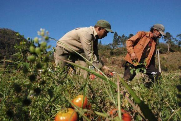 Resaltan potencial de la agricultura orgánica en Cuba
