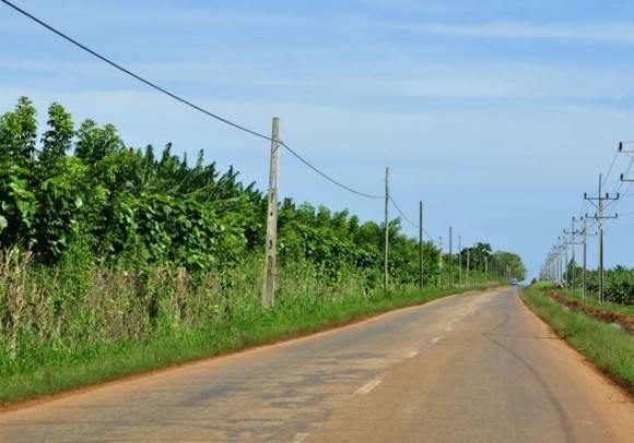 El cultivo del platano. Foto: Roberto Garaicoa Martínez/ Cubadebate.