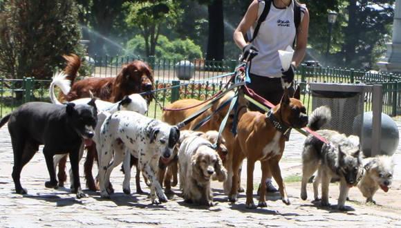 Paseadores de Perros1