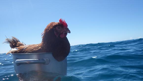 Monique, la gallina viajera. Foto: BBC Mundo.