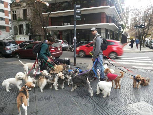 paseadores de Perros2