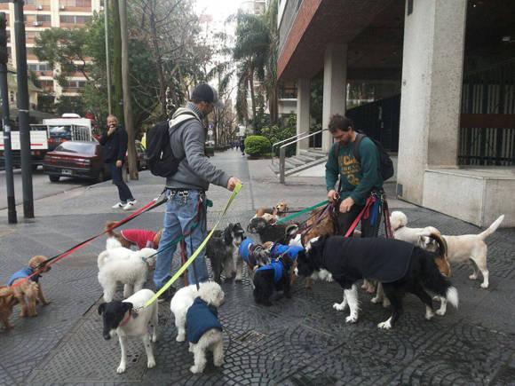 Resultado de imagen para paseando perros platica