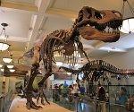 Museo de Historia Natural de Nueva York 1