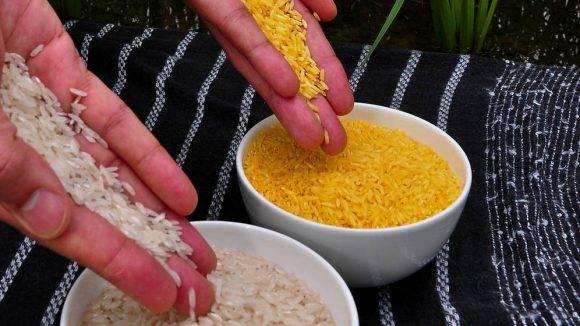 El arroz dorado, que aporta precursores de vitamina A allí donde es escasa, no se cultiva todavía debido a la oposición del grupo ecologista Green Peace.